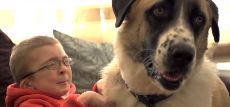 This Little Boy Has a Rare Muscle Condition and Lives with Intense Pain. Then He Met this Wonderful Dog.